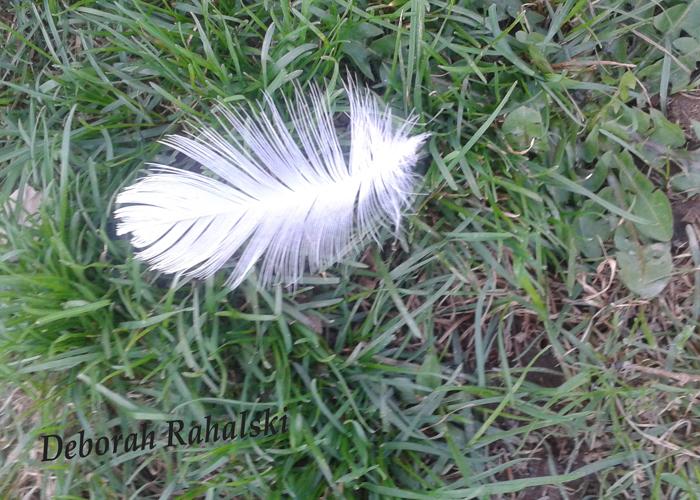 feather 100dpi